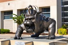 James Madison University Duke Dog  -Ethan Bannar