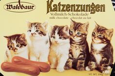 Cat Tongues are a classic childhood treat in Europe. Milk chocolate is shaped in a stretched out oval that resembles a cat's tongue. Chocolate Cat, German Chocolate, Chocolate Lovers, Chocolate Treats, White Chocolate, Cat Lover Gifts, Cat Gifts, Cat Lovers, 90s Childhood
