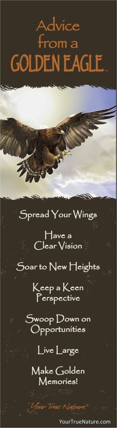 Advice from a Golden Eagle: Spread Your Wings. Your True Nature.