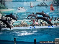 Dolphins - Safari World