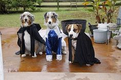#Adlandpro Happy October! Hope these pups get good treats for dressing up. #dogs #humor #halloween