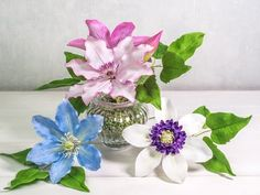 Sugar artist Nicholas Lodge creates a white sugar lily, sharing his secrets for forming, realistic color, wrapping and more. Sugar Paste Flowers, Icing Flowers, Fondant Flowers, Clay Flowers, Edible Flowers, Paper Flowers, Clematis Flower, Anemone Flower, Cake Templates