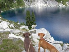 Hiking with dogs - good info on dos and don'ts