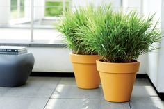 elho pure round ochre #elho #pure #design #terrace #outdoor #plants #elhofeeling #sunshine