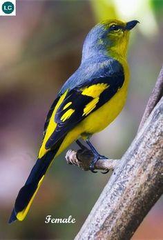 Amphibians, Mammals, Wild Creatures, Pink Daisy, Colorful Birds, Predator, Beautiful Birds, Animal Kingdom, Animales