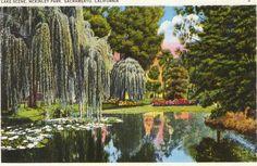 Vintage Postcard - McKinley Park in East Sacramento