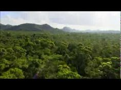 Green Paradise - Jungle & Coral - Belize - YouTube
