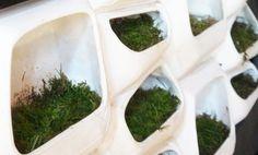 Energia Dal Muschio, la Parete Verde è Biofotovoltaica