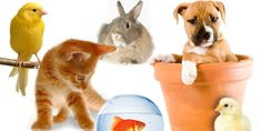 3 Important Factors to Consider When Adopting a Pet