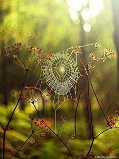 Spider web in the forest captured in enchanting photos by Guillermo Carballa Art Et Nature, All Nature, Amazing Nature, Nature Photos, Spider Art, Spider Webs, Spider Silk, Affinity Photo, Forest Photography