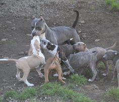 Momma roxy  with my pups isn't she beautiful  by iam_thehulk