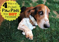 4 ways to protect dog paw pads from hot pavement