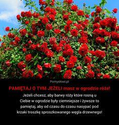 PAMIĘTAJ O TYM JEŻELI masz w ogrodzie róże! - P… na Stylowi.pl Bonsai, Flora, Garden, Plants, Garten, Lawn And Garden, Gardens, Plant, Gardening