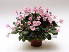 African Violet...Midget Lilian (E.Champion) Single pink. Mosaic variegated, plain. Miniature