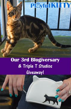 A fun giveaway for cat lovers. GO ENTER