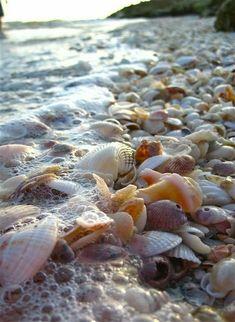 Sea shell covered beach, Blind Pass, Sanibel Island, Florida