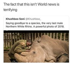 There are only two northern white rhinos left and they are both female, there ar. - There are only two northern white rhinos left and they are both female, there are around - Animals And Pets, Funny Animals, Cute Animals, Wild Animals, Rasengan Vs Chidori, Save Our Earth, Faith In Humanity Restored, Sad Stories, The More You Know
