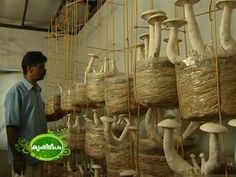 Success story of mushroom cultivation in Malayalam/മലയാളം