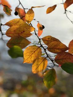 Stockholm in autumn