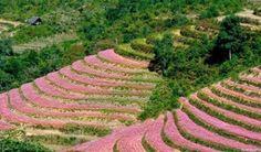 Du lịch Hà Giang mùa nào đẹp nhất ?