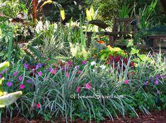 Florida-Friendly Plant Choices