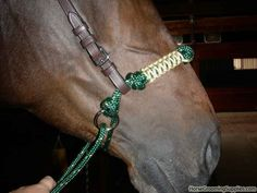 indian bosal - Google Search