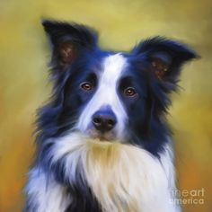 Custom pet portrait. Border Collie dog painting by pet portrait artist Michelle Wrighton. Prints available. http://www.michellewrighton.com