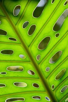 Leaf-abstract by liveforphotos, via Flickr