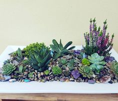 http://www.anaberjewelry.com/  Succulent planter with Amethyst , Agate and Quartz Crystals  Beautiful home decor made by Anaber Jewelry