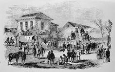 Natals first public auction of sugar by Robert Acutt 1855