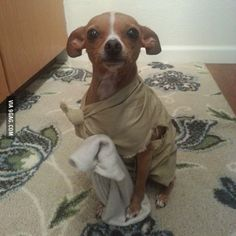 """""""Master has given Dobby a sock. Dobby is free."""" """"What...? I didn't give..."""""""