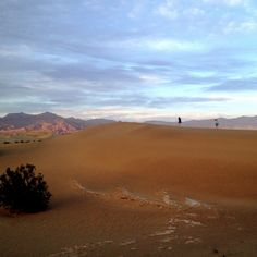 At the sand dunes. Death Valley, CA #desert #sand #dunes