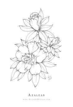 A graceful cluster of Azalea flowers - Azalea flower drawing in ink by Katrina Crouch of Blushed Design. Delicate shading adds depth to the drawing without overpowering the gentle contour. Realistic Flower Drawing, Simple Flower Drawing, Easy Flower Drawings, Beautiful Flower Drawings, Floral Drawing, Flower Sketches, Drawing Sketches, Art Drawings, Easy To Draw Flowers