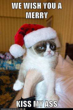 Do you love Grumpy cat. If you do, These Grumpy cat Memes work for you.These Grumpy cat Memes work are so funny and humor.Read This Top 23 Grumpy Cat Memes Wor Cute Cats, Funny Cats, Funny Animals, Cute Animals, Funniest Animals, Funny Cat Pics, Animal Jokes, Grumpy Cat Quotes, Grumpy Cat Humor