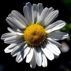 Good evening dear friends #macro #flower #garden