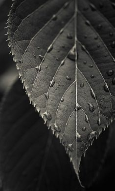£4.95 GBP - Framed Print - Black And White Raindrops On A Leaf (Picture Daisy Rose Art) #ebay #Home & Garden
