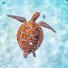the beauty of nature via the Ningaloo reef 🐢@australiascoralcoast