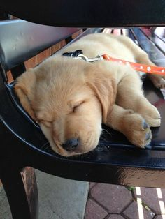 And when this sleeper thought the park bench was for napping.