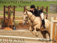 How to Find a Distance to a Jump, Part 2 Horse Training, English, Horses, Learning, Animals, Animales, Animaux, Studying, Animal
