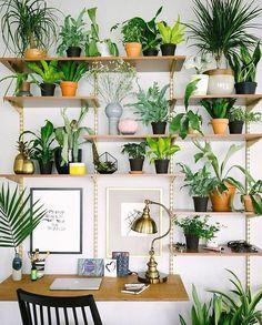 "thesill: ""@botanybox's plantshelfie ✨✨👍🏼 """