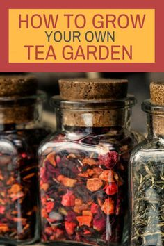 How To Grow Your Own Tea Garden – Find out how easy it is to make you own tea at home. How To Grow Your Own Tea Garden – Find out how easy it is to make you own tea at home. Montana, Hydroponic Gardening, Container Gardening, Indoor Gardening, Gardening Hacks, Vegetable Gardening, Urban Gardening, Kitchen Gardening, Flower Gardening