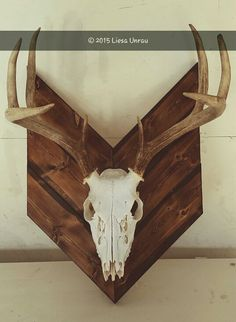 European Mount. Boiled, treated and spray painted the deer skull. Torched the wood, varnished it and wiped the varnish off with paper towel right after.