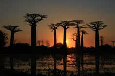 Sunset over the Baobabs, Madagascar