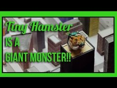It's been a popular year for hamsters, particularly very tiny, very hungry ones. The breakout YouTube stars have racked up more than 21 million video views eating tiny burritos, tiny pizza, tiny spaghetti and more, and as of today, they're adding 'authors' to their resume.
