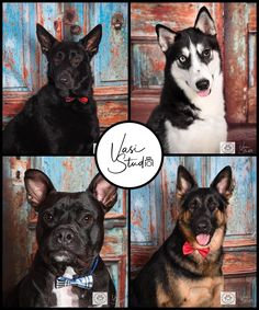 Do you want a professional portrait of your pets? A photo you will be proud to show your family friends and neighbors? This is my goal. #visstudiofl #PalmBeachGardens #PalmBeach #WestPalmBeach #Jupiter#Royale Contact: Vasi Studio (561)-307-9875 info@vasistudio.com Visit www.vasistudio.com #PetPhotography #PetPortrait #PetPhotographer #PetArt #AnimalArt#toppetphotographer #florida #Stuart #BocaRaton #topratedphotographer#Pets #Photography #Animals #photographer #photoart #studiophotography
