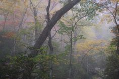 Fall colors and fog at Douthat State Park, Virginia