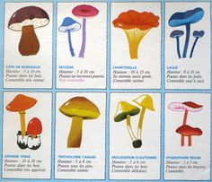 mushrooms in french
