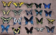 Butterfly Magnets Wholesale Lot of 20 by DougWalpusArtStudio, $25.00