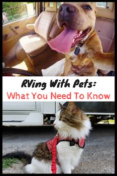 Thinking about RVing with pets, like a dog or cat (or even a little critter like a guinea pig)? Well, the good news is, you can! But there are some RV pet safety tips and other best practices to keep in mind. We cover everything you need to know!