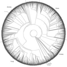 The phylogenetic tree of life. - Imgur